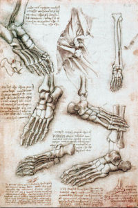 Da Vincis Drawing of the foot Voodoo Floss for Sprained Ankles